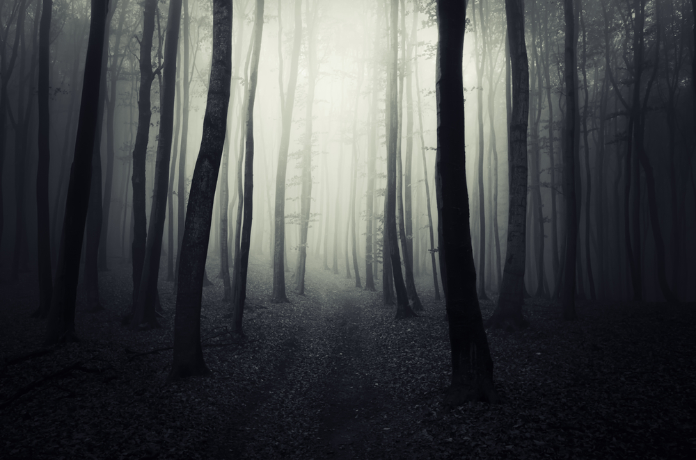 dark path forest